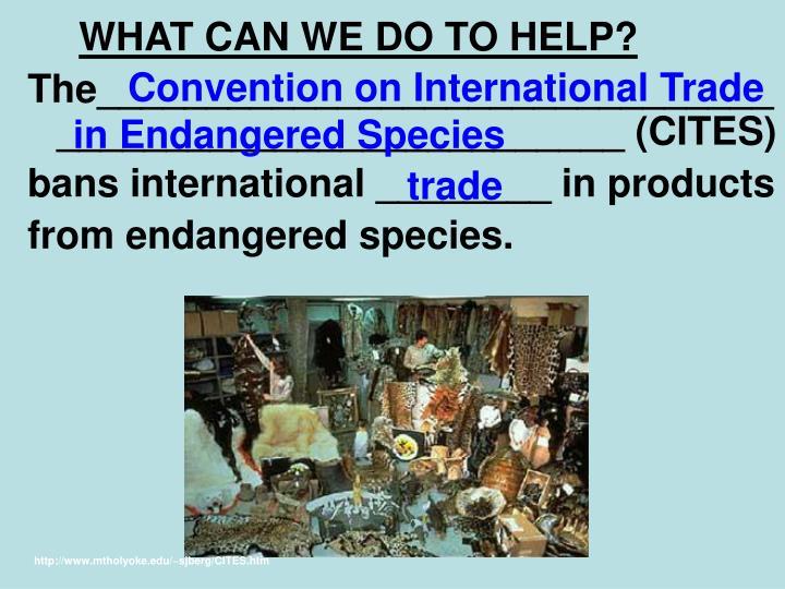 Convention on International Trade