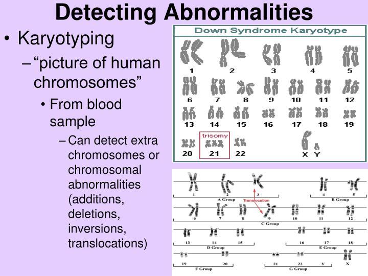 PPT - Unit 6: Genetics & Heredity Ch 8: Heredity & Ch 11 ...