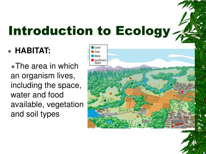 introduction to ecology Amazoncom: introductory ecology (9780632042272): peter cotgreave, irwin forseth: books overall, this is a good introduction to what is acknowleged to be a complex subject tony andrew, university of ulster, coleraine, times higher education supplement, may 2003 read more from the back cover this book is a core introductory text which examines basic principles of ecology.