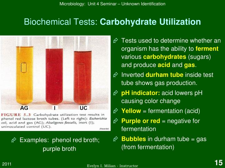 identification of unknown carbohydrates lab report Experiment: determination of carbohydrate by anthrone method  the same procedure but how i can do calculate the carbohydrate value mg/ml in mg/g.