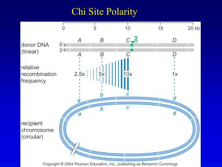 Chi Site Polarity