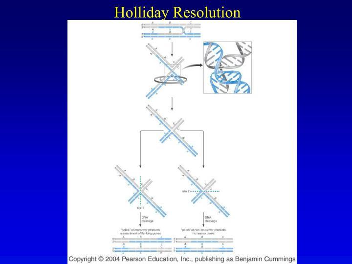 Holliday Resolution