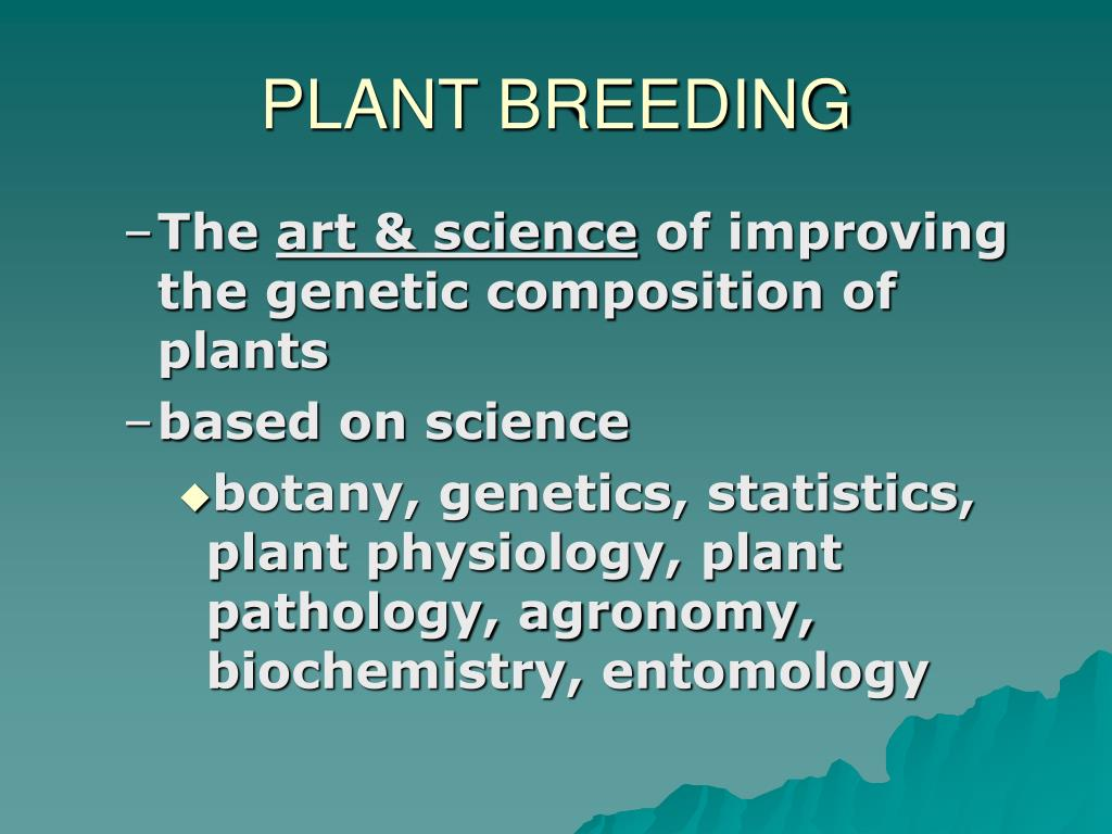 PPT - The Science of Developing New Wheat Varieties