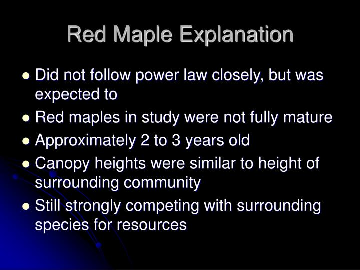 Red Maple Explanation