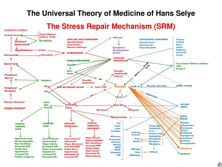 The Universal Theory of Medicine of Hans Selye