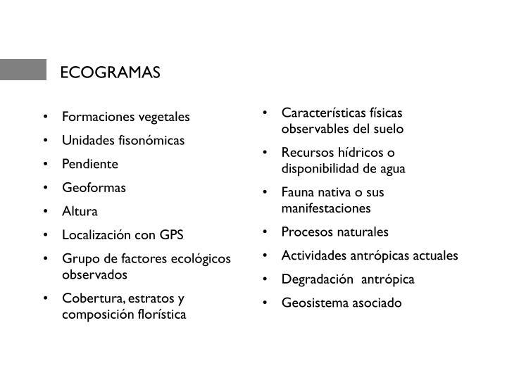 ECOGRAMAS