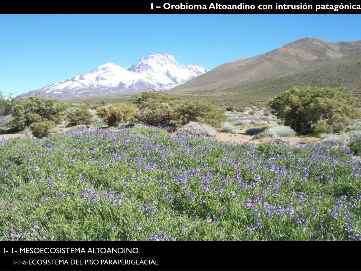 I – Orobioma Altoandino con intrusión patagónica