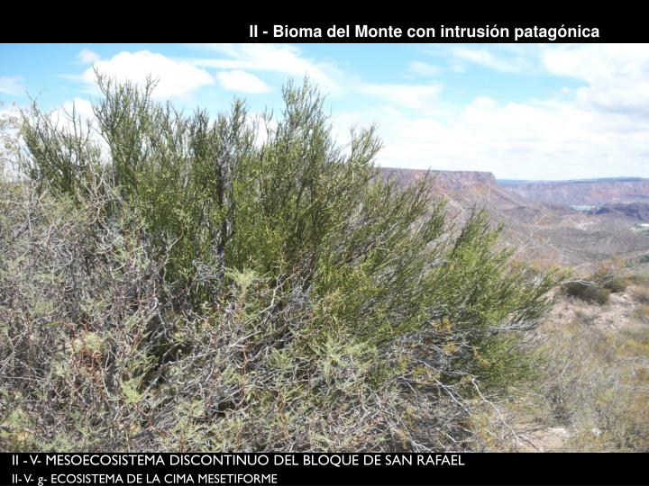 II - Bioma del Monte con intrusión patagónica