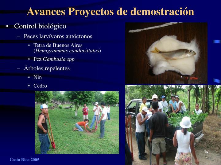 Avances Proyectos de demostración