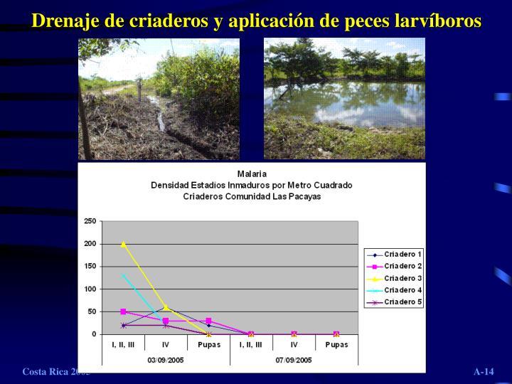 Drenaje de criaderos y aplicación de peces larvíboros