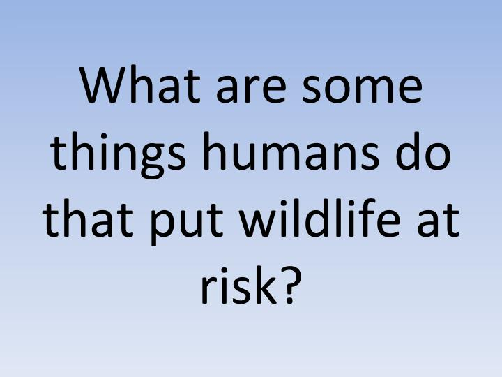 What are some things humans do that put wildlife at risk?