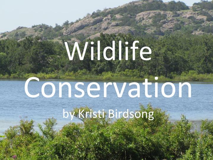 Wildlife conservation by kristi birdsong