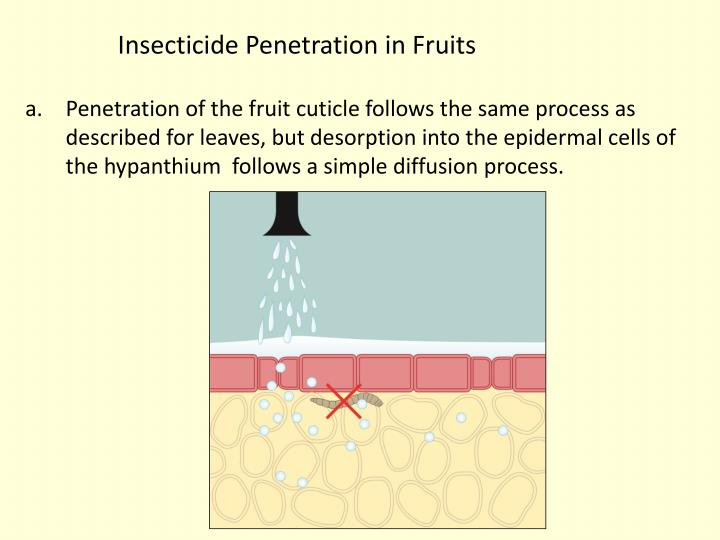 Insecticide Penetration in Fruits