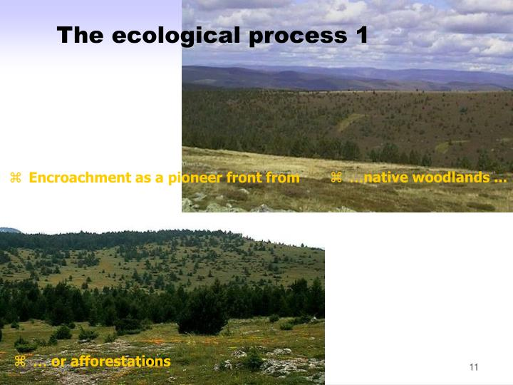 The ecological process 1