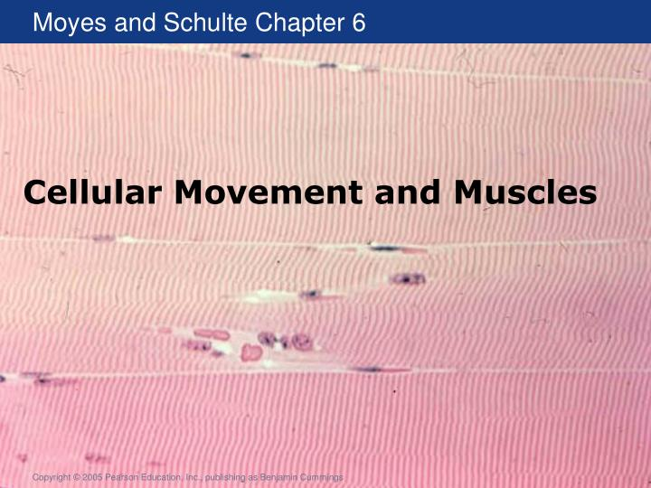 cellular movement and muscles n.