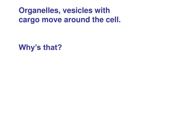 Organelles, vesicles with