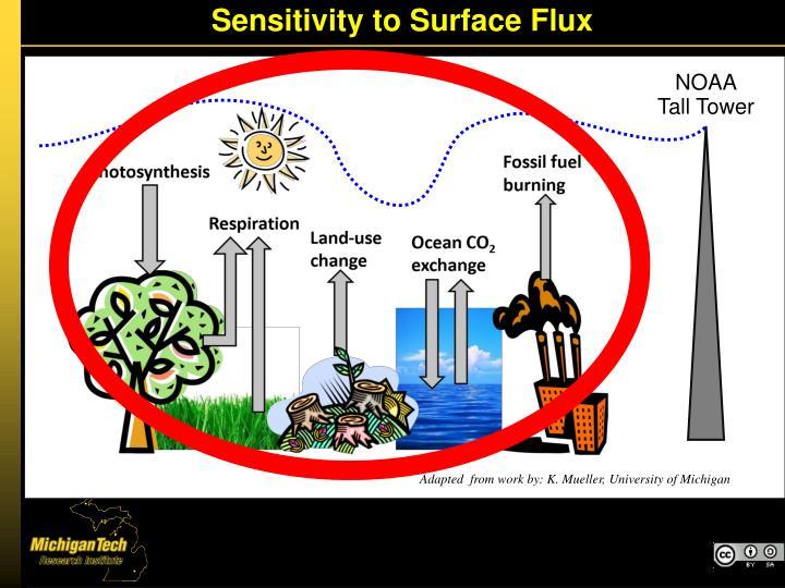 Sensitivity to Surface Flux
