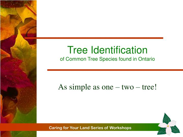 tree identification of common tree species found in ontario n.