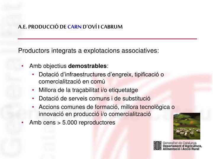 A.E. PRODUCCIÓ DE