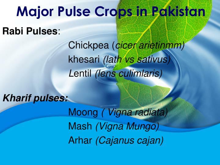 Major Pulse Crops in Pakistan