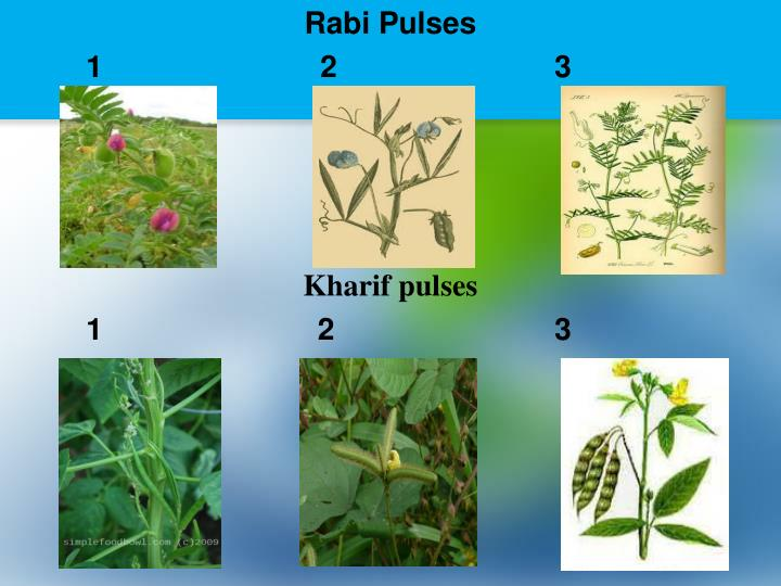 Rabi Pulses