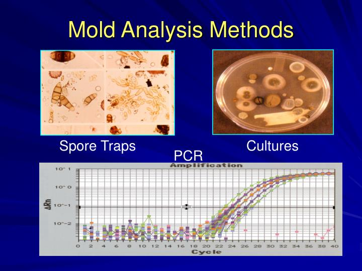 Mold Analysis Methods