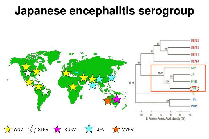 Japanese encephalitis serogroup