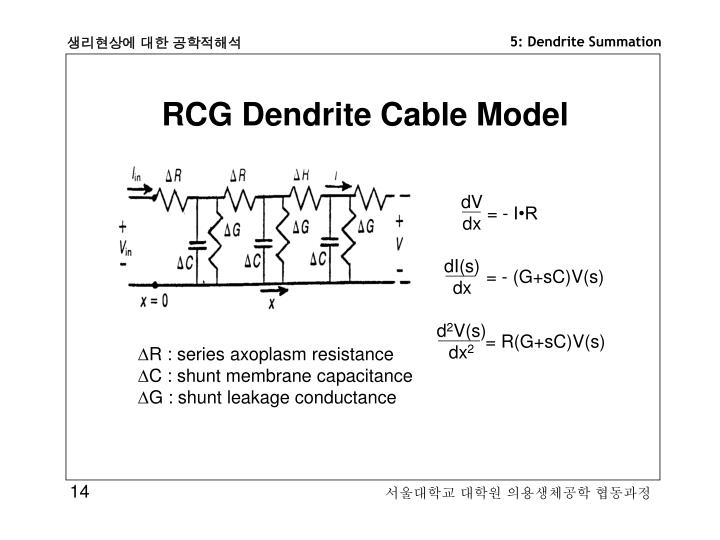 RCG Dendrite Cable Model