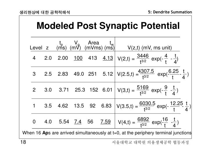 Modeled Post Synaptic Potential
