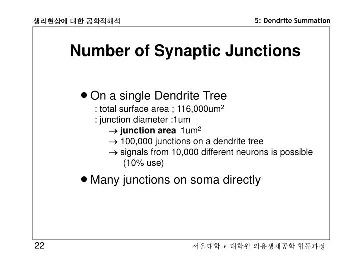Number of Synaptic Junctions