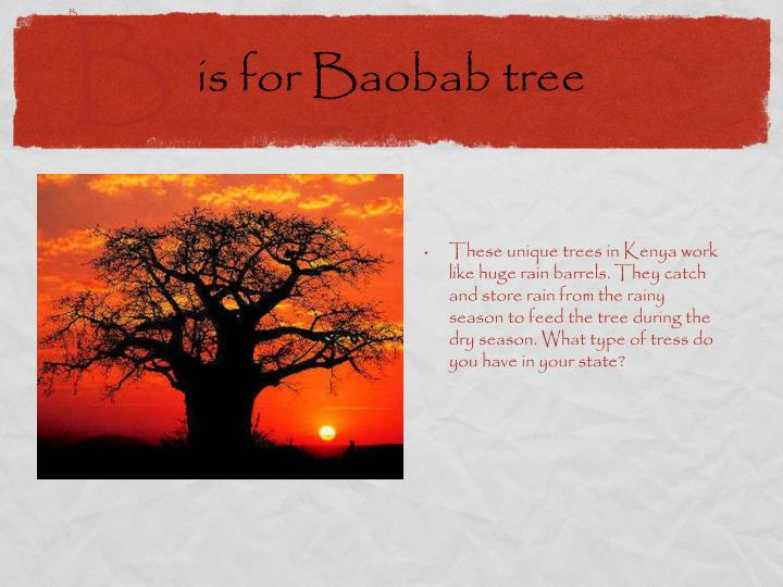 is for Baobab tree