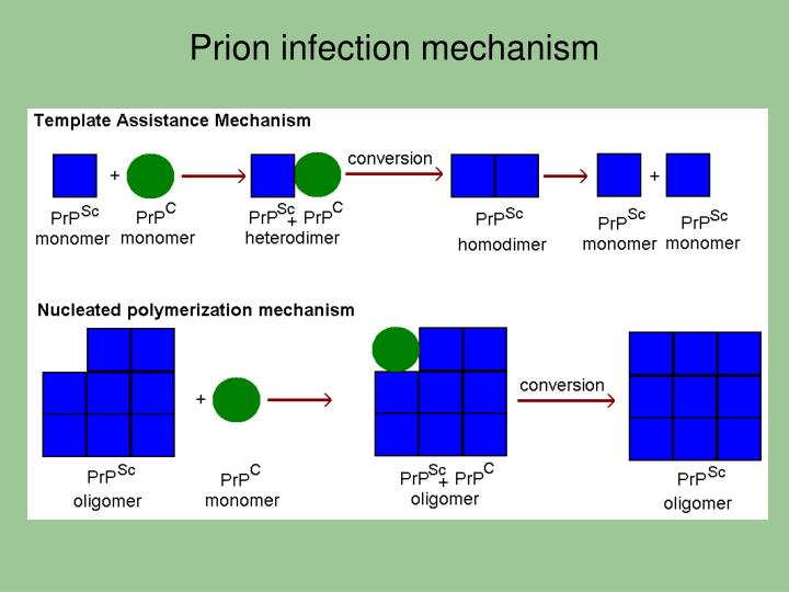 Prion infection mechanism