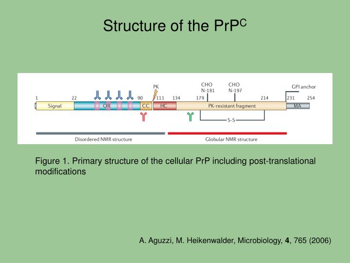 Structure of the PrP