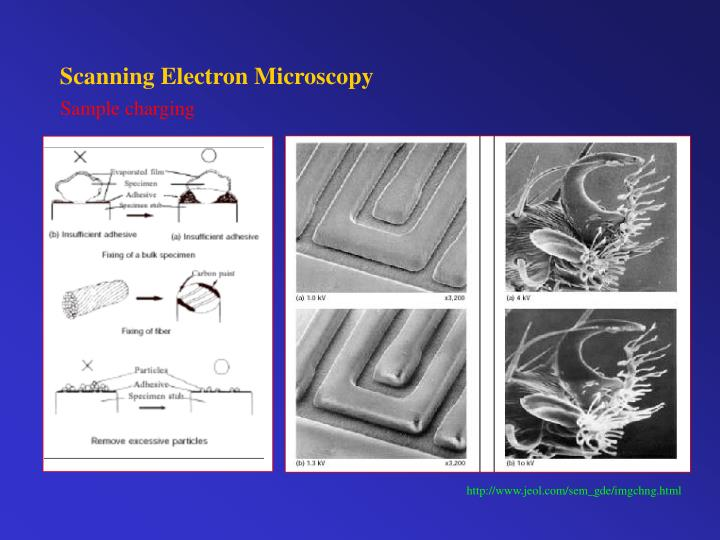 Scanning Electron Microscopy