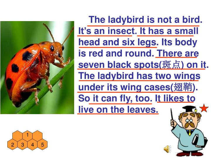 The ladybird is not a bird.