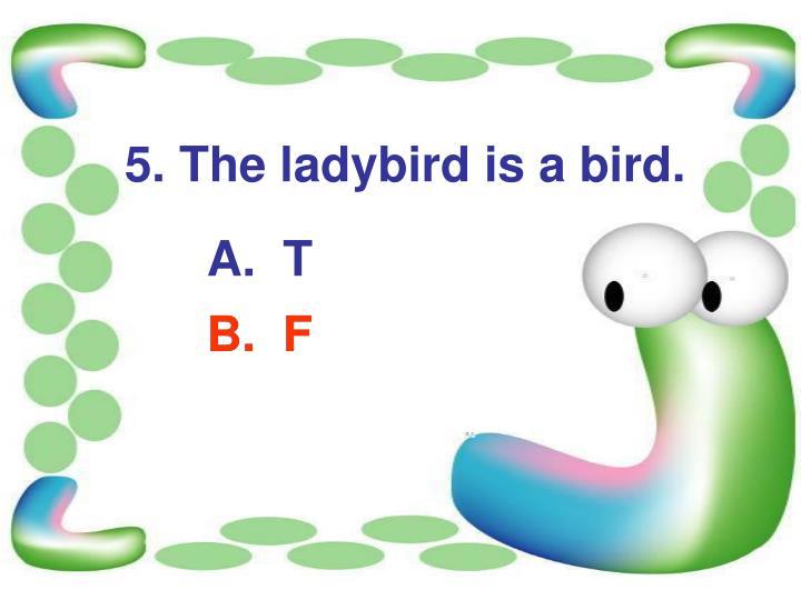 5. The ladybird is a bird.