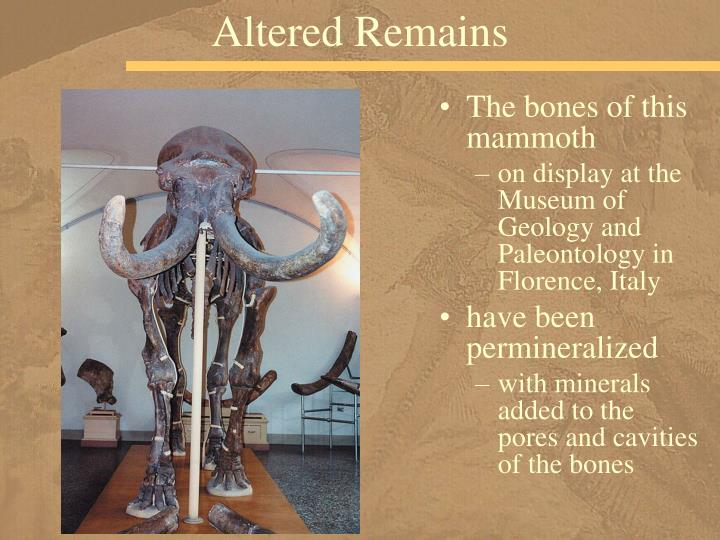 Altered Remains