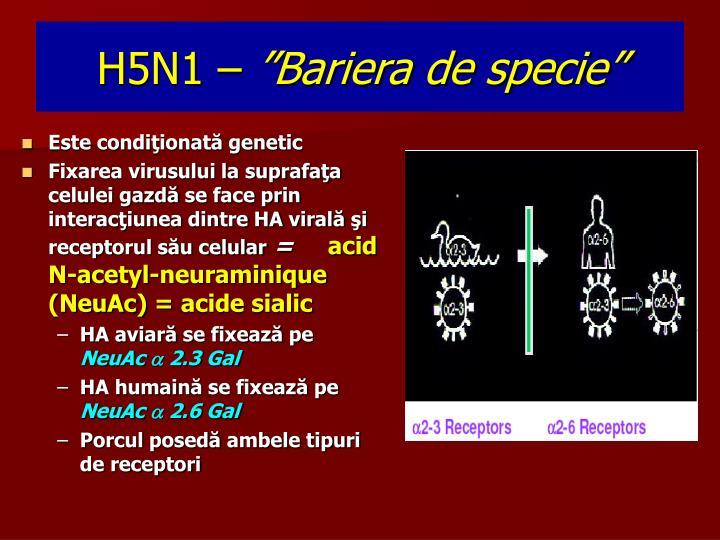 H5N1 –