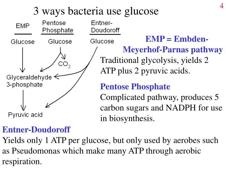 3 ways bacteria use glucose