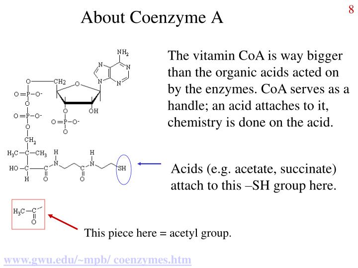 About Coenzyme A