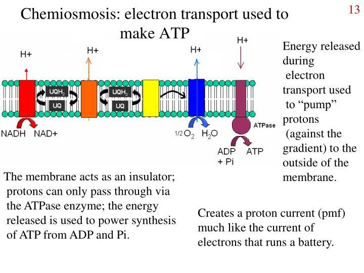 Chemiosmosis: electron transport used to make ATP