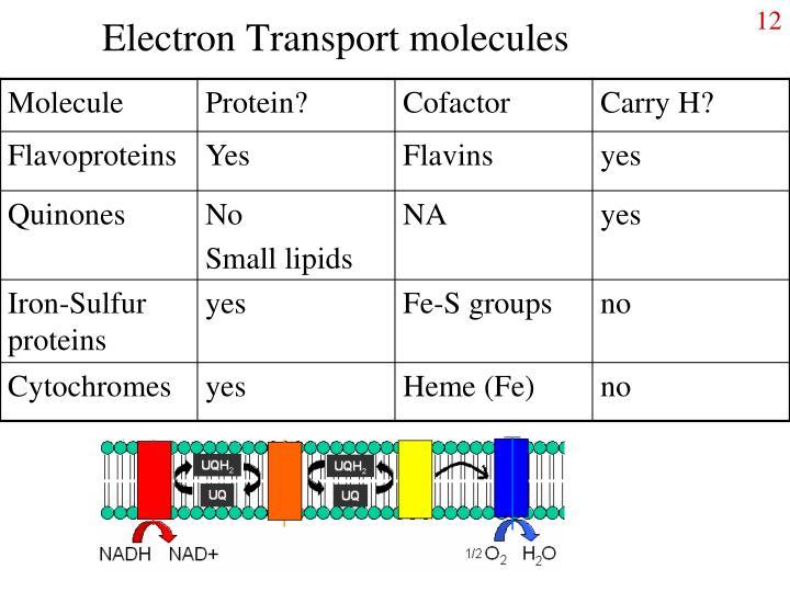 Electron Transport molecules