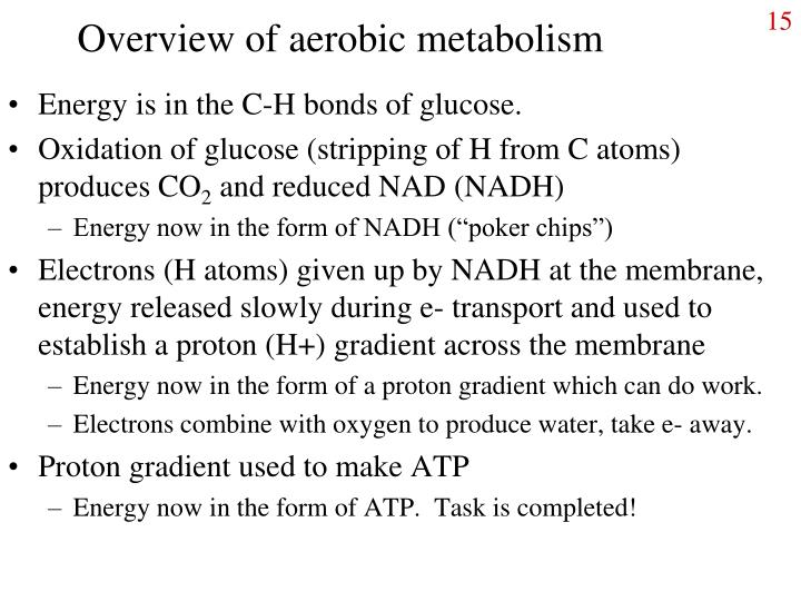 Overview of aerobic metabolism