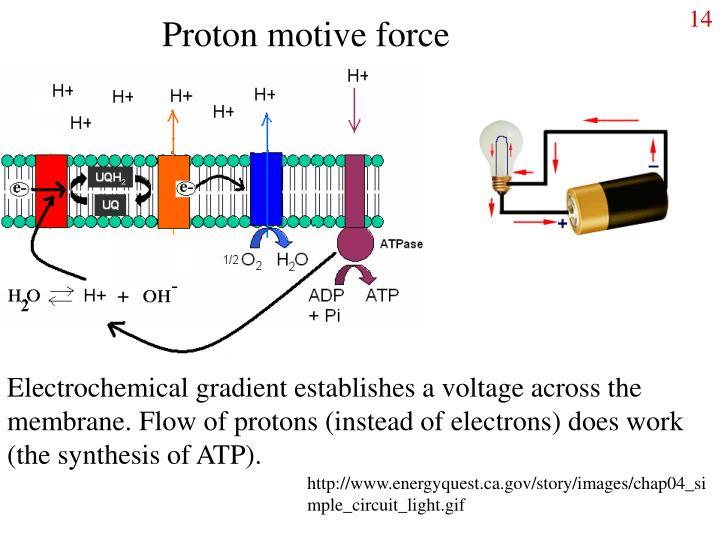 Proton motive force