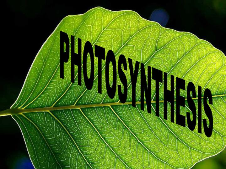 plants that use chemosynthesis A: producers that live deep in the ocean without the use of sunlight make food by a process called chemosynthesis.