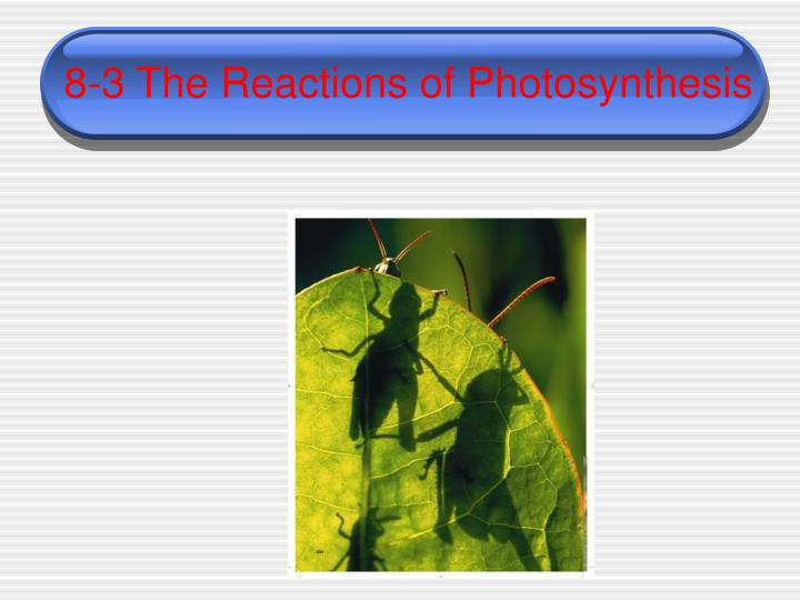 8 3 the reactions of photosynthesis n.