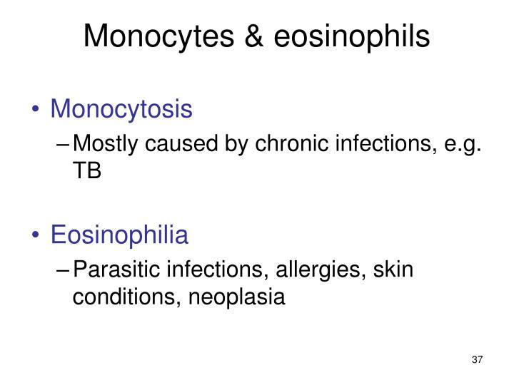 Monocytes & eosinophils