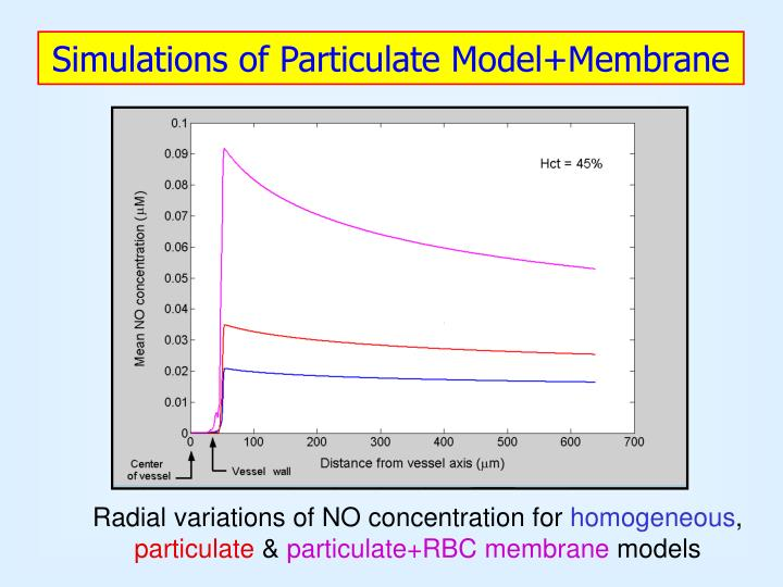 Simulations of Particulate Model+Membrane