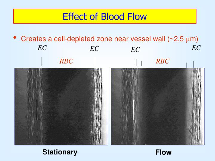 Effect of Blood Flow