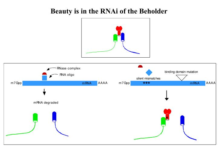 Beauty is in the RNAi of the Beholder